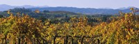 """High Angle View Of A Field, Alexander Valley, Napa, California, USA by Panoramic Images - 27"""" x 9"""""""
