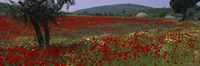 """Red poppies in a field, Turkey by Panoramic Images - 27"""" x 9"""" - $28.99"""