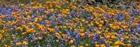 "27"" x 9"" Poppy Field Paintings"
