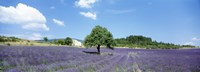 """Lavender Field Provence France by Panoramic Images - 27"""" x 9"""""""