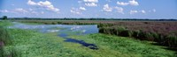"""Tall grass in a lake, Finger Lakes, Montezuma National Wildlife Refuge, New York State, USA by Panoramic Images - 27"""" x 9"""""""