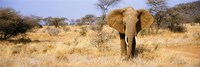 Elephant Somburu Kenya Africa