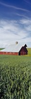 "Barn in a wheat field, Washington State (vertical) by Panoramic Images - 9"" x 27"""