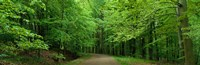 "Road Through a Forest near Kassel Germany by Panoramic Images - 27"" x 9"", FulcrumGallery.com brand"