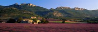 """Lavender Fields And Farms, High Provence, La Drome, France by Panoramic Images - 27"""" x 9"""""""
