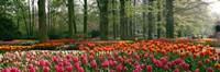 """Keukenhof Garden, Lisse, The Netherlands by Panoramic Images - 27"""" x 9"""""""