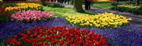 """Colorful flower beds, Keukenhof Garden, Lisse, The Netherlands by Panoramic Images - 27"""" x 9"""""""