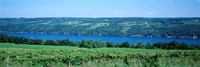 Vineyard with a lake in the background, Keuka Lake, Finger Lakes, New York State, USA Fine Art Print