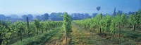 """UK, Great Britain, Sussex, Vineyard and hot air balloon by Panoramic Images - 27"""" x 9"""""""