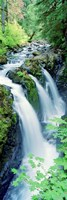 "Sol Duc Falls Olympic National Park WA by Panoramic Images - 9"" x 27"""