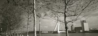 "Bridge Over A River, Erasmus Bridge, Rotterdam, Netherlands by Panoramic Images - 27"" x 9"""