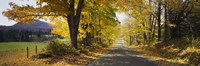 """Trees on both sides of a road, Danby, Vermont, USA by Panoramic Images - 27"""" x 9"""""""