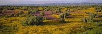 """High Angle View Of Wildflowers In A Landscape, Santa Rosa, Sonoma Valley, California, USA by Panoramic Images - 27"""" x 9"""""""