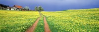 "Dirt road passing through a field, Germany by Panoramic Images - 27"" x 9"" - $28.99"