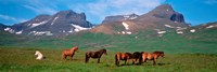"Horses in Borgarfjordur, Iceland by Panoramic Images - 27"" x 9"""