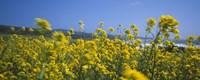 Close-up of Flowers California USA