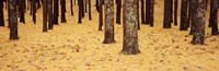 Low Section View Of Pine And Oak Trees, Cape Cod, Massachusetts, USA Fine Art Print