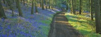 """Bluebell flowers along a dirt road in a forest, Gloucestershire, England by Panoramic Images - 27"""" x 9"""""""