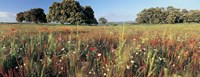 """Wild flowers in a field, Andalucia, Spain by Panoramic Images - 27"""" x 9"""""""