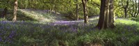 """Bluebells In A Forest, Newton Wood, Texas, USA by Panoramic Images - 27"""" x 9"""""""
