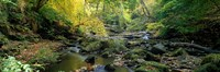 """Stream Flowing Through Forest, Eller Beck, England, United Kingdom by Panoramic Images - 27"""" x 9"""""""