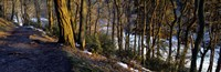 """Walkway Passing Through The Forest, Bridgestone Walk, North Yorkshire, England, United Kingdom by Panoramic Images - 27"""" x 9"""""""