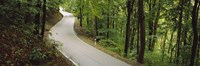 """Empty road running through a forest, Stuttgart, Baden-Wurttemberg, Germany by Panoramic Images - 27"""" x 9"""""""