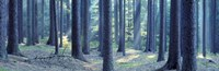 "Trees in a forest, South Bohemia, Czech Republic by Panoramic Images - 27"" x 9"""