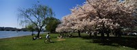 """Group of people in a garden, Cherry Blossom, Washington DC, USA by Panoramic Images - 27"""" x 9"""""""