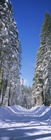 """Trees on both sides of a snow covered road, Crane Flat, Yosemite National Park, California (vertical) by Panoramic Images - 9"""" x 27"""""""