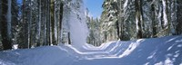 """Trees on both sides of a snow covered road, Crane Flat, Yosemite National Park, California (horizontal) by Panoramic Images - 27"""" x 9"""""""
