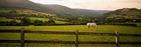 "Horse in a field, Enniskerry, County Wicklow, Republic Of Ireland by Panoramic Images - 27"" x 9"""