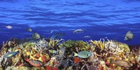Fish Swimming Near a Coral Reef