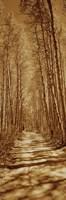 Trees along a road, Log Cabin Gold Mine, Eastern Sierra, Californian Sierra Nevada, California, USA Fine Art Print