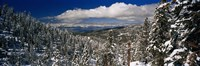 """Snow covered pine trees in a forest with a lake in the background, Lake Tahoe, California, USA by Panoramic Images - 27"""" x 9"""""""
