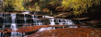"Waterfall in a forest, North Creek, Zion National Park, Utah, USA by Panoramic Images - 27"" x 10"""