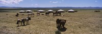 "Group of horses and yurts in a field, Independent Mongolia by Panoramic Images - 27"" x 9"""