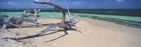 Driftwood on the beach, Green Island, Great Barrier Reef, Queensland, Australia Fine Art Print