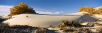 """Desert plants in White Sands National Monument, New Mexico by Panoramic Images - 27"""" x 9"""""""