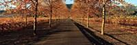 """Vineyards along a road, Beaulieu Vineyard, Napa Valley, California, USA by Panoramic Images - 27"""" x 9"""""""