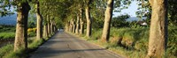 """Trees along a road, Vaucluse, Provence, France by Panoramic Images - 27"""" x 9"""" - $28.99"""