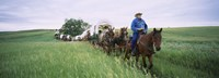 Historical reenactment of covered wagons in a field, North Dakota, USA Fine Art Print