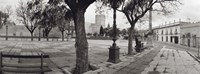 Trees in front of a building, Alameda Vieja, Jerez, Cadiz, Spain Fine Art Print
