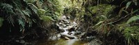 """Stream flowing in a forest, Milford Sound, Fiordland National Park, South Island, New Zealand by Panoramic Images - 27"""" x 9"""""""