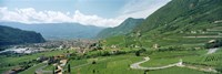 """Curved road passing through a landscape, Bolzano, Alto Adige, Italy by Panoramic Images - 27"""" x 9"""""""