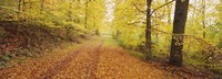 """Road covered with autumnal leaves passing through a forest, Baden-Wurttemberg, Germany by Panoramic Images - 27"""" x 9"""""""