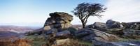 Bare tree near rocks, Haytor Rocks, Dartmoor, Devon, England Fine Art Print