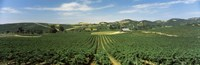"""High angle view of a vineyard, Carneros District, Napa Valley, Napa County, California by Panoramic Images - 27"""" x 9"""""""