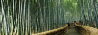 Stepped walkway passing through a bamboo forest, Arashiyama, Kyoto Prefecture, Kinki Region, Honshu, Japan Fine Art Print