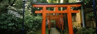 """Torii Gates in a park, Ueno Park, Taito, Tokyo Prefecture, Kanto Region, Japan by Panoramic Images - 27"""" x 9"""""""